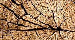 legno zone riforestazione