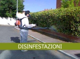 disinfestazione