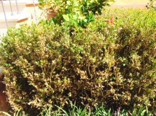 consulenze fitosanitarie