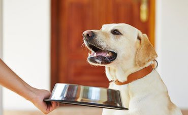 Quality food for pets