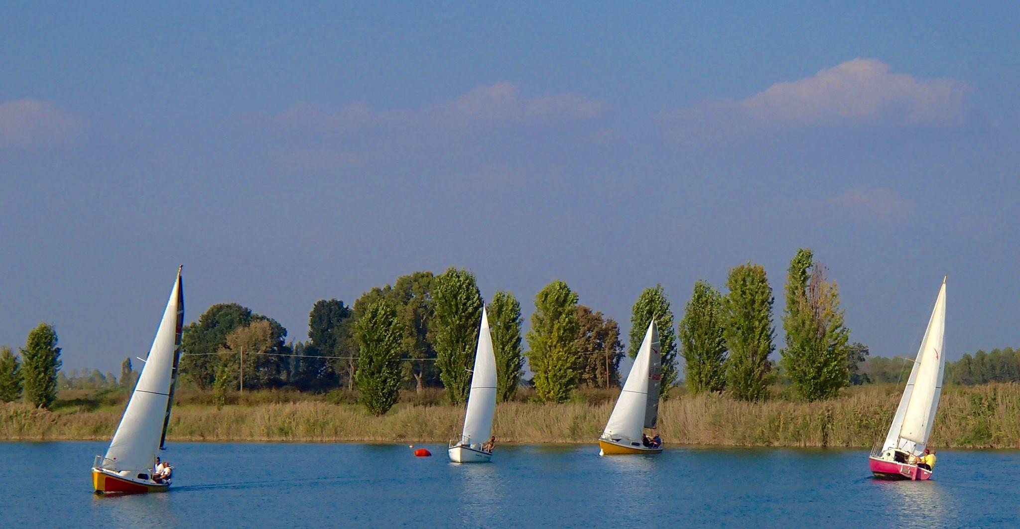 quattro barche a vela in un laghetto e dietro vista degli alberi e dell'erba alta