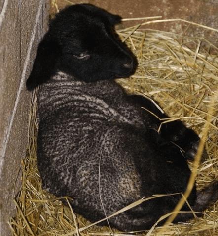 animali trattoria sala la cava