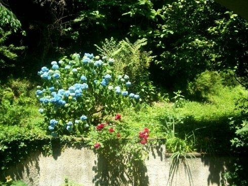 Fiori azzurri e rossi