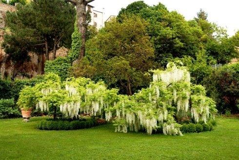 Piante e arbusti