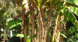 potatura piante ad alto fusto