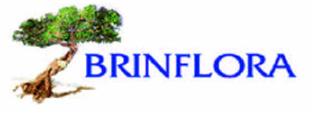 FIORERIA BRINFLORA GIUSTIZIERI - Logo