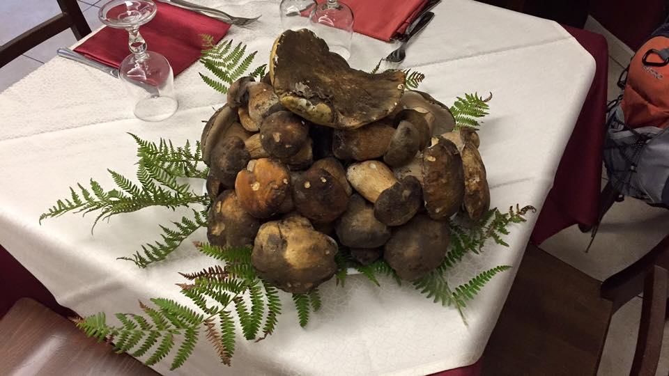 Dei funghi porcini appoggiati su un tavolo