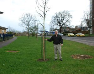 Tree planted in Tyne Crescent