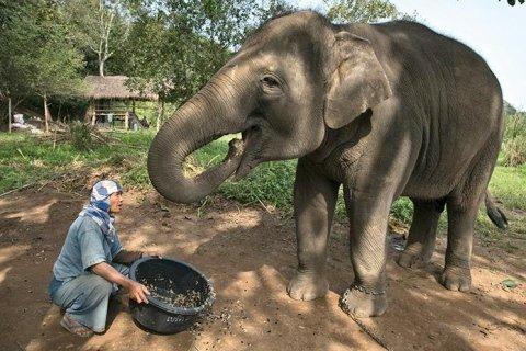 Donna che regge una bacinella piena di chicchi di caffè, un elefante alla sua destra