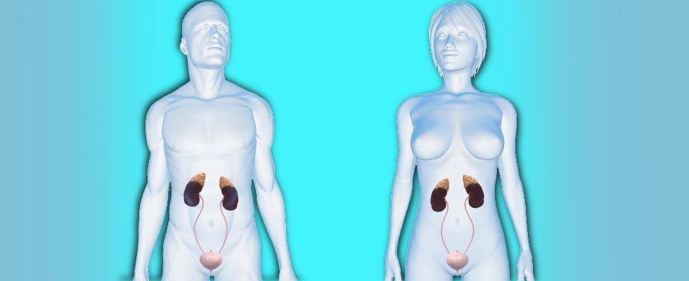 urologo dr fagnoni marco
