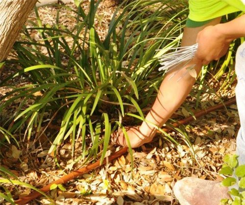 Landscaping Service San Antonio, TX