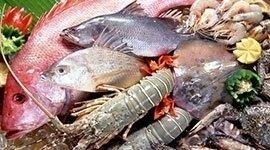 Specialità pesce, Ristorante Il Baccanale Roma