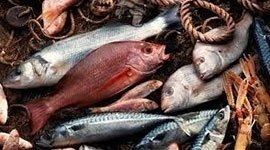 Pesce, Ristorante Il Baccanale Roma