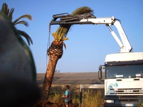Cura delle palme