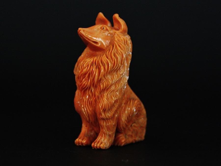 cane in corallo cerasuolo