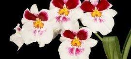 Manutenzione giardini, orchidee, gladioli recisi