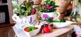 Piante ornamentali da interno, piante ornamentali da esterno, piante per ufficio