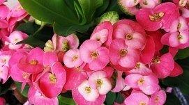 servizio a domicilio, bouquet da sposa, fiori per matrimoni
