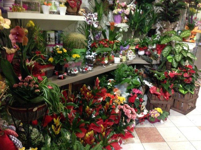 negozio di fiori a rivoli