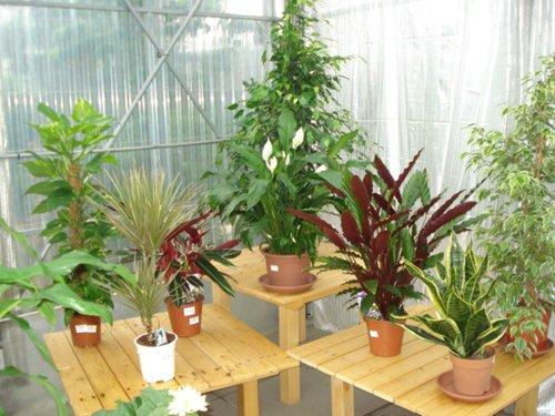 piante per condominio