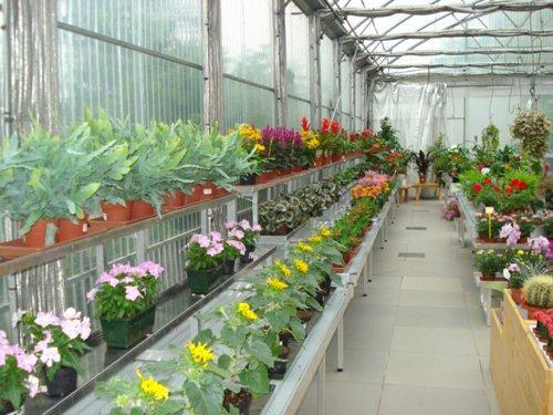 corridoio con fiori