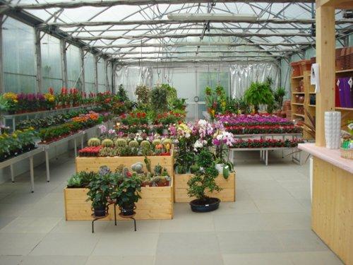 serra con fiori diversa tipologia