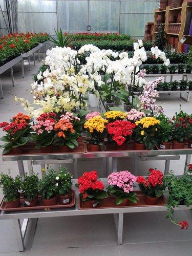 vista frontale scaffale con vasi di fiori
