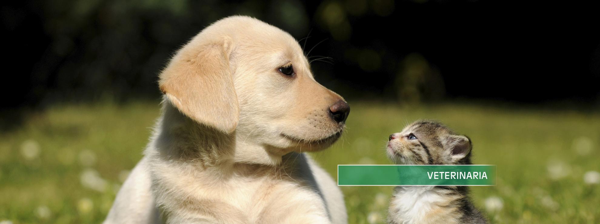 cane e gatto scritto Veterinaria