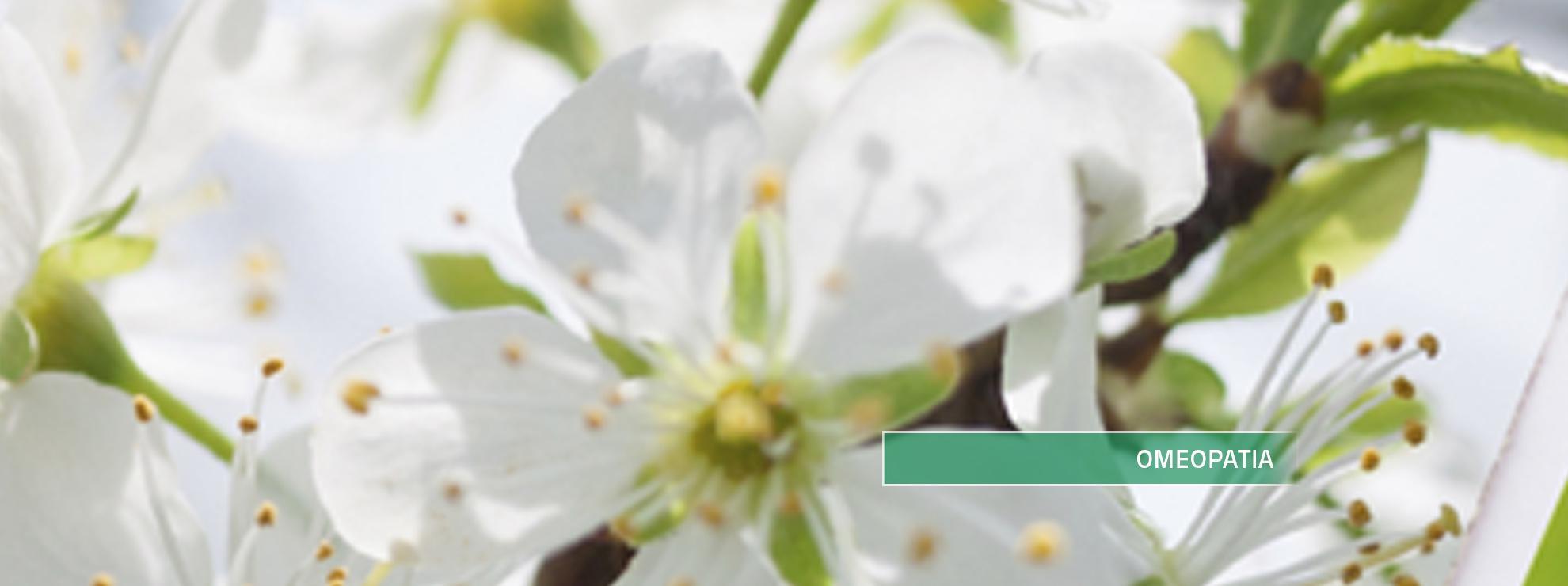 fiore bianco con scritto Omeopatia