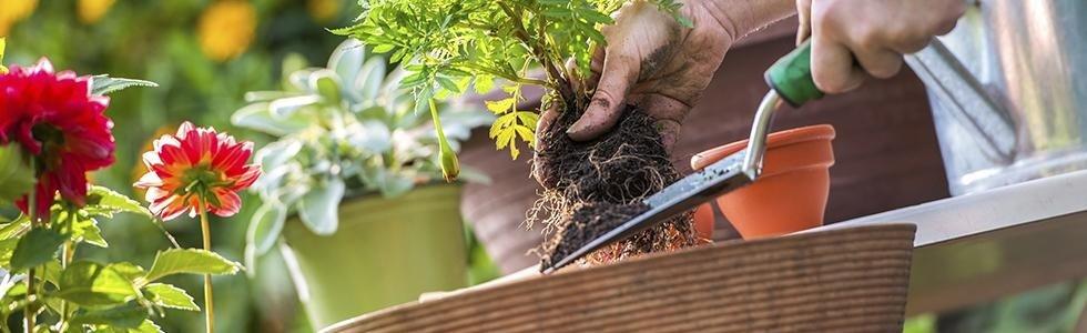 giardiniere buccinasco