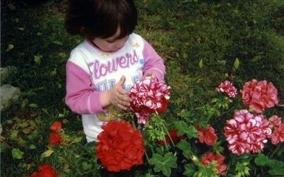 Alla scoperta dei fiori