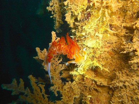 Immersioni Subaquee - Feeldive Scarlino Diving Center, Scarlino (GR)