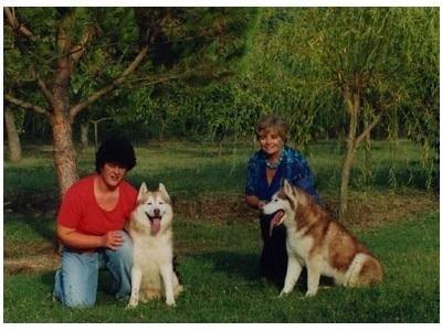 allevatori cani