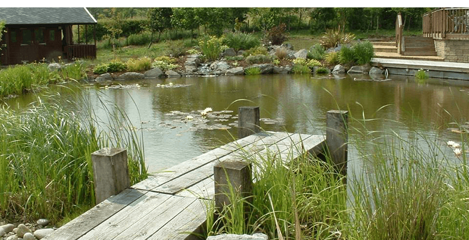 Picturesque pond with a wooden jetty