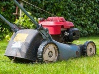 Tosatura erba