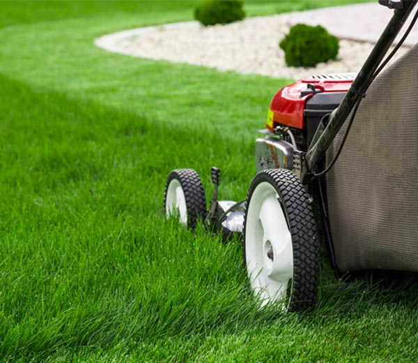 amazing grass lawn mowing and garden maintenance lawnmover
