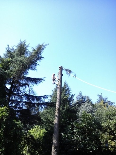 esperti abbattimento alberi