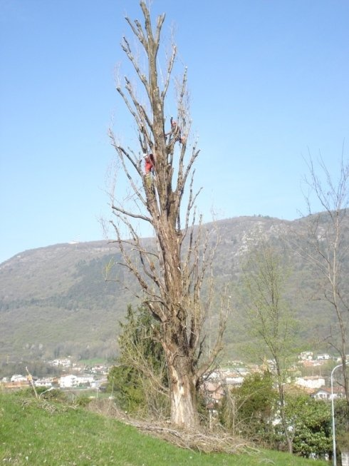esperti di potatura alberi ad alto fusto