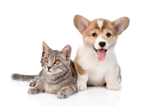 Cat and a dog sitting together