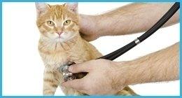 analisi veterinarie