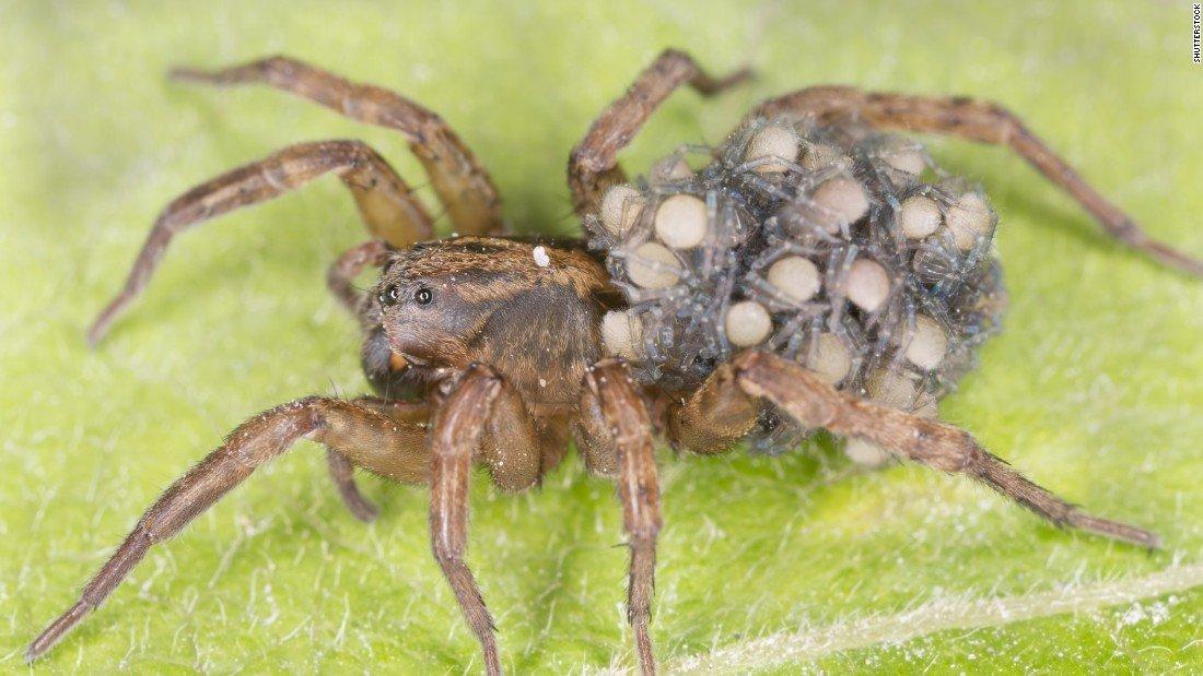 Spider Control & Extermination: Edmond, Mustang Piedmont ...