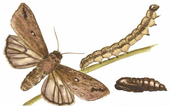 Moth Control Amp Moth Extermination Edmond Piedmont Okc Ok