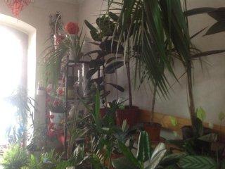 Vendita di piante Carpineto Romano