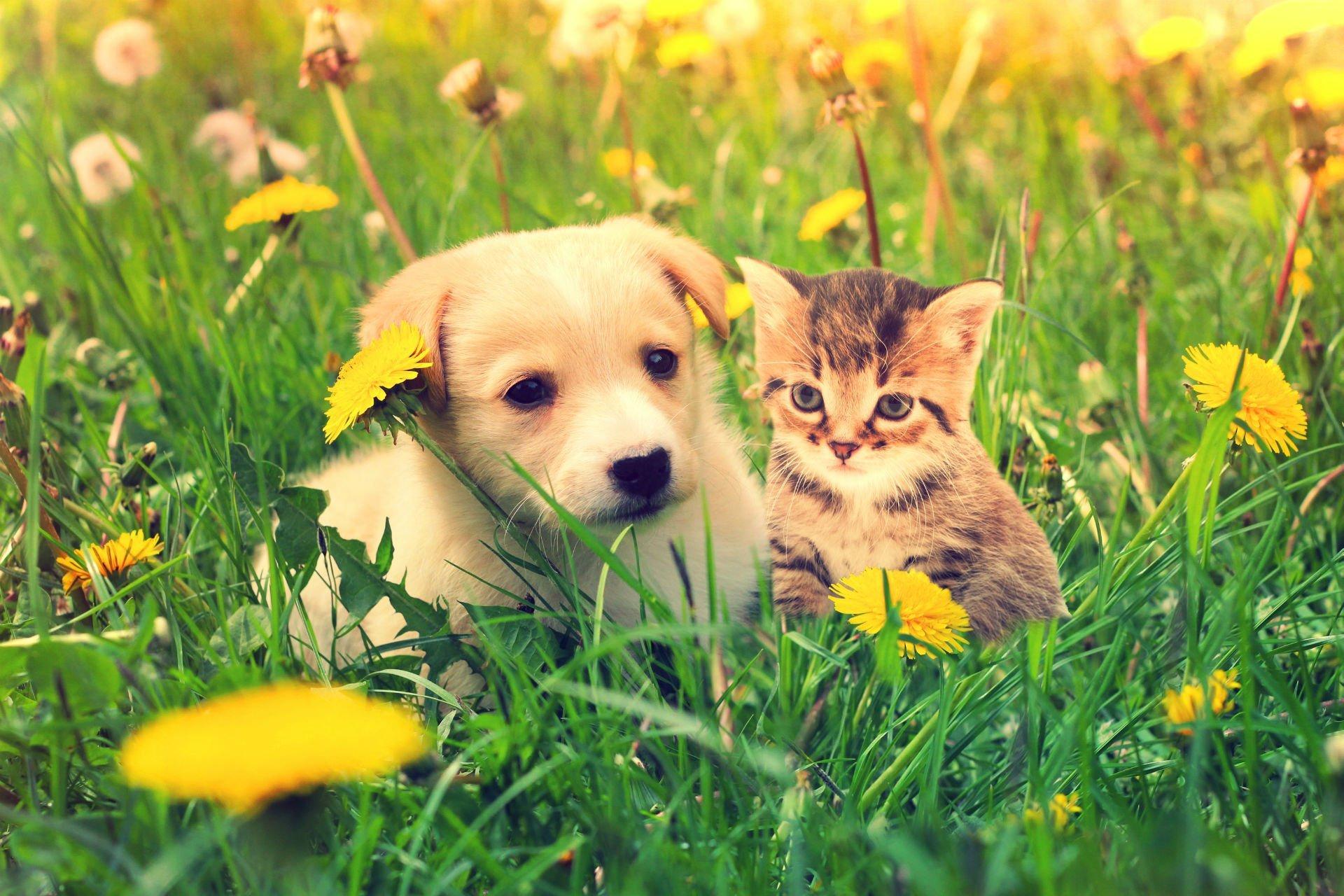 un cagnolino affianco a un gattino in un prato
