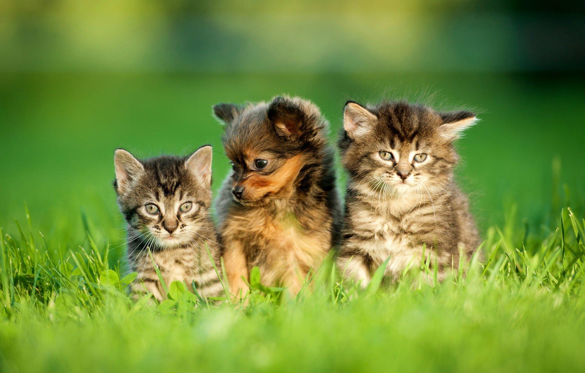 un cagnolino in mezzo a due gattini