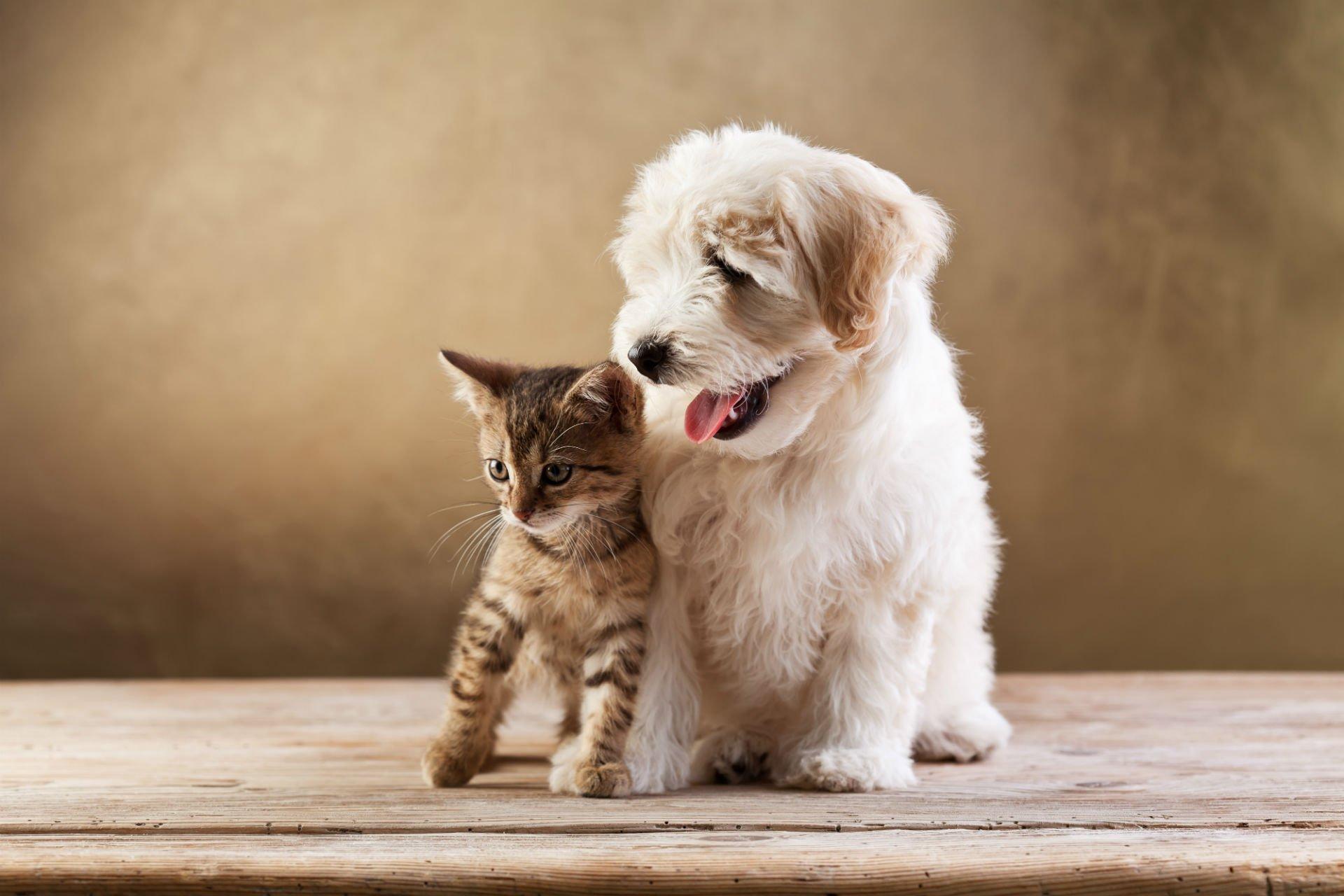 un cagnolino bianco e affianco un gattino
