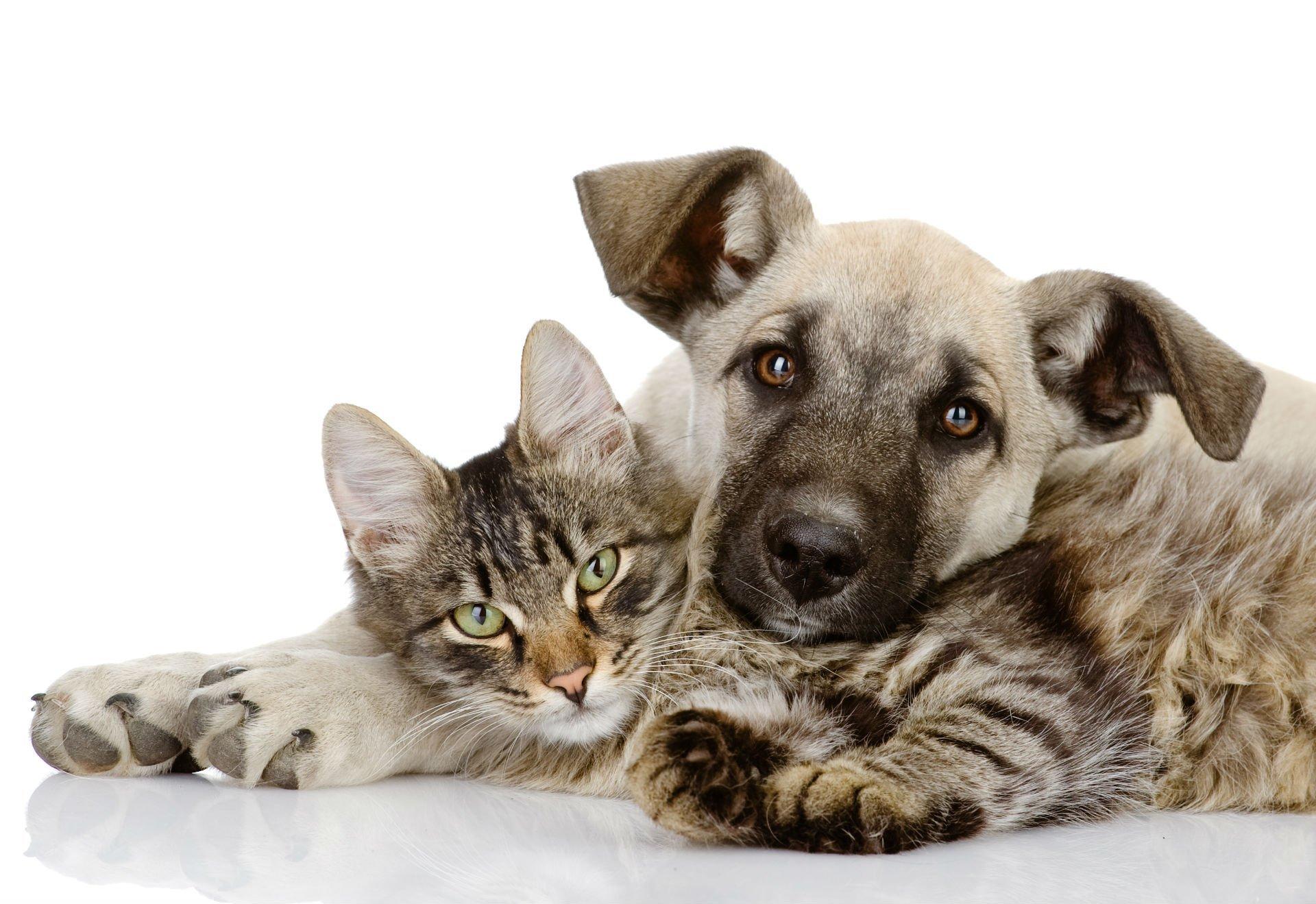 un cane e un gatto  sdraiati assieme