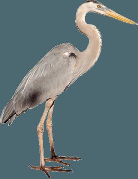 historic-bethabara-park-facts-wildlife