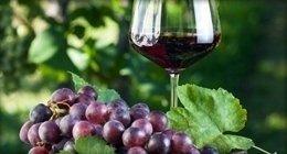 vino prodotti collina