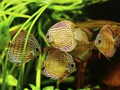 Vendita pesci e accessori per acquari milano i for Tartarughe acquatiche vendita